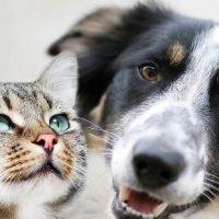 Honden en Katten